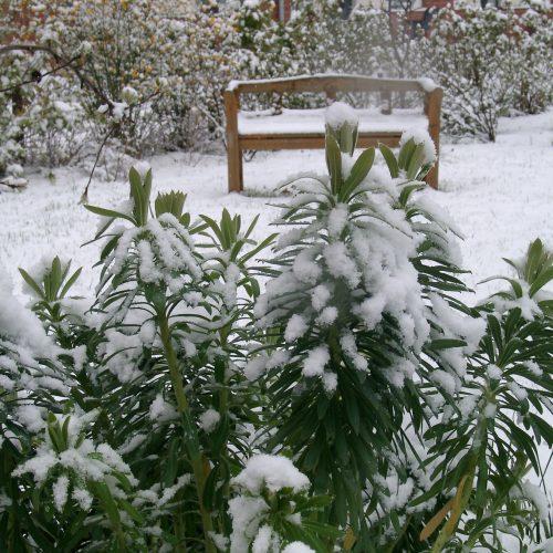 GMH_BDS_2011_40-01_Ein Stauden-Winter-Gartentraum