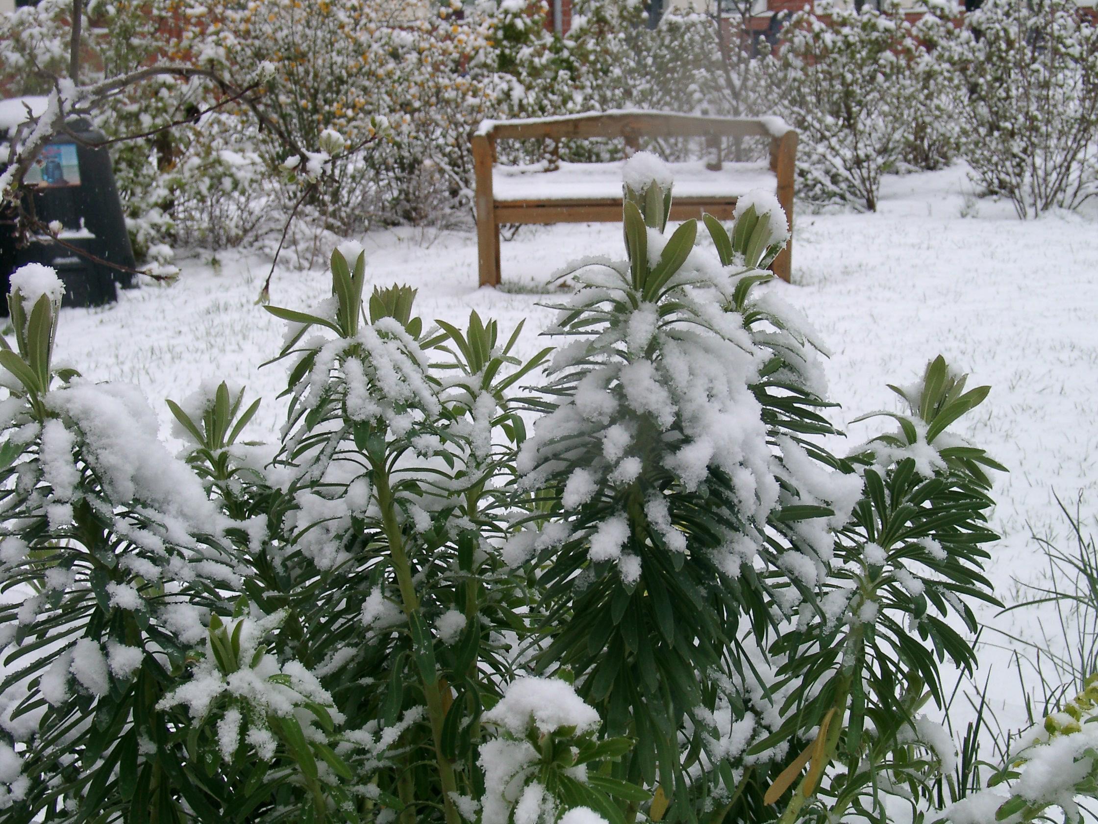 weitere Bilder zu: Ein Stauden-Winter-Gartentraum