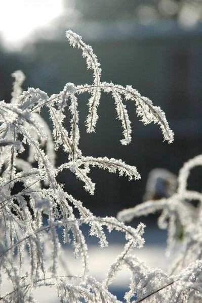GMH_BDS_2011_40-02_Ein Stauden-Winter-Gartentraum
