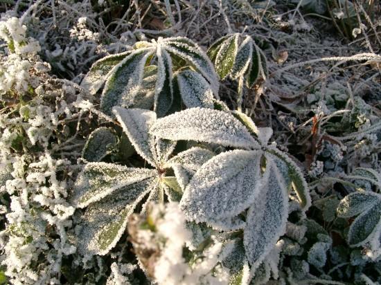 GMH_BDS_2011_40-03_Ein Stauden-Winter-Gartentraum