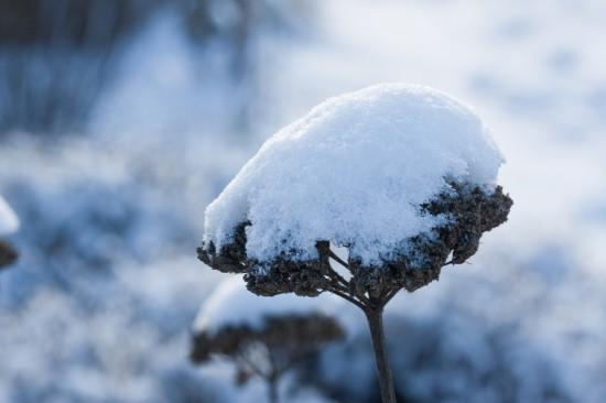 GMH_BDS_2011_40-04_Ein Stauden-Winter-Gartentraum