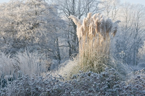 Ein Stauden-Winter-Gartentraum