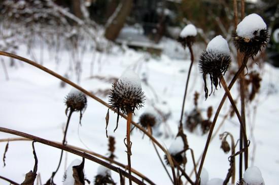 GMH_BDS_2011_40-07_Ein Stauden-Winter-Gartentraum
