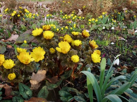 GMH_BDS_2011_40-10_Ein Stauden-Winter-Gartentraum