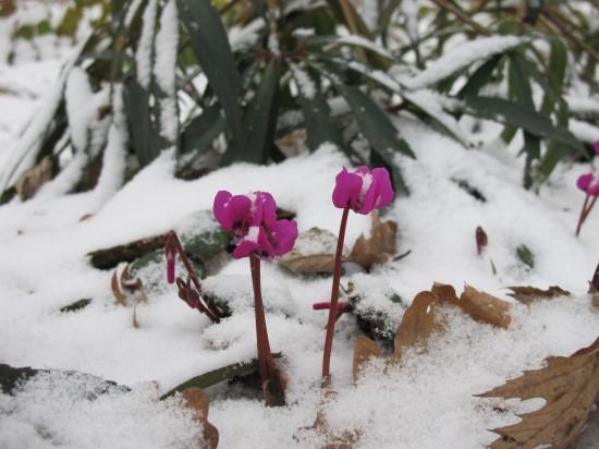 GMH_BDS_2011_40-11_Stauden ein Wintertraum