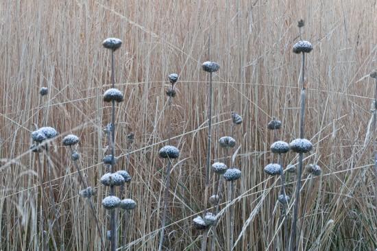GMH_BDS_2011_40-12_Ein Stauden-Winter-Gartentraum