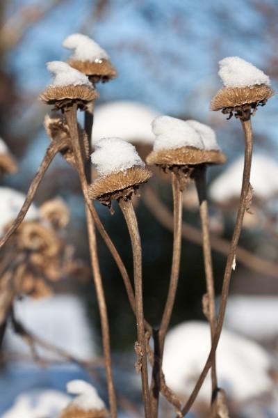 GMH_BDS_2011_40-13_Ein Stauden-Winter-Gartentraum