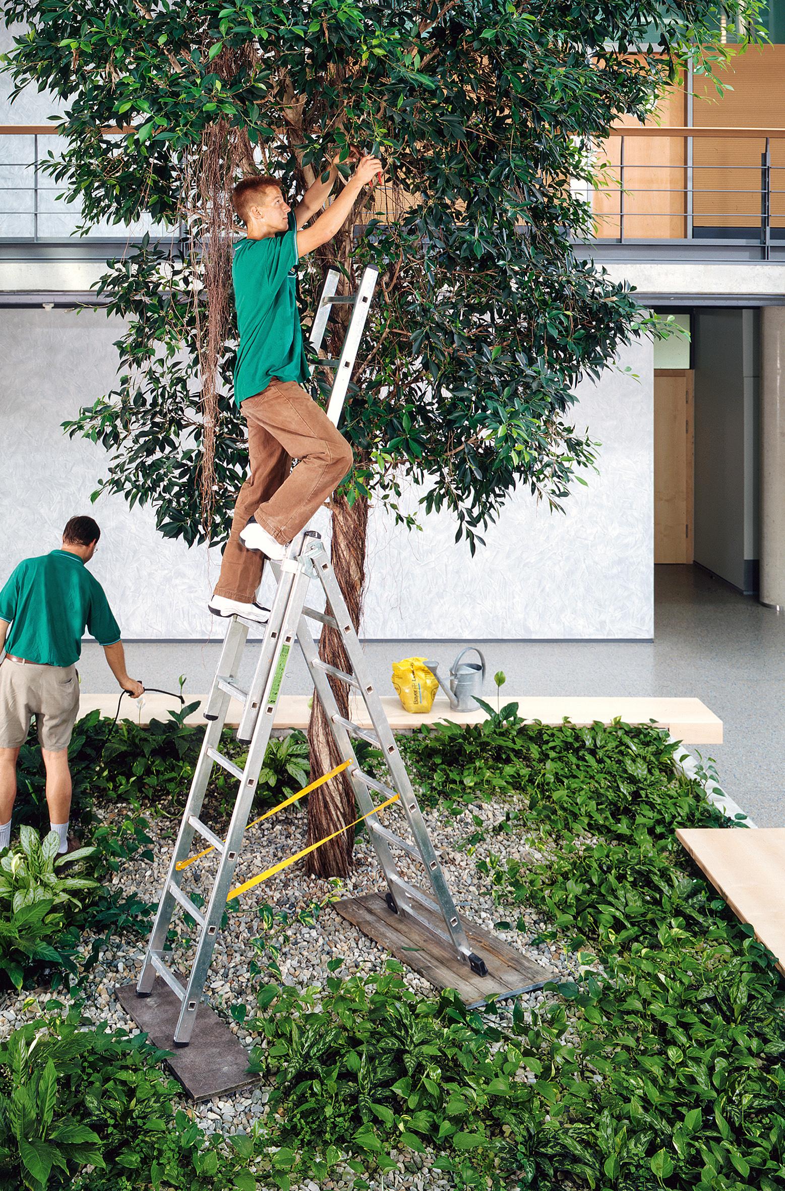 Mission Raumbegrünung: Wohlfühlen mit Pflanzen in Bürogebäuden