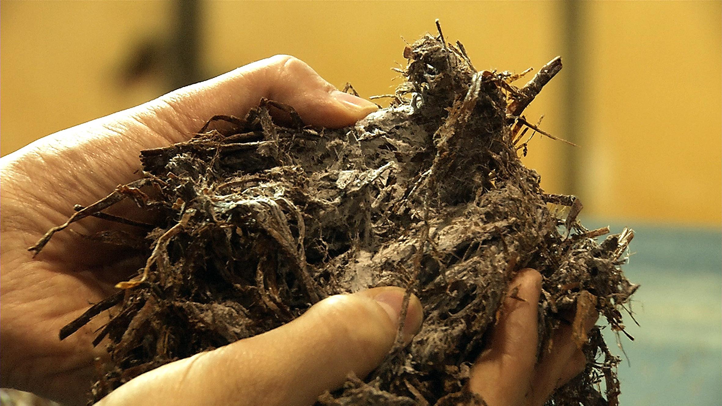 Der Stoff, auf dem die Champignons wachsen