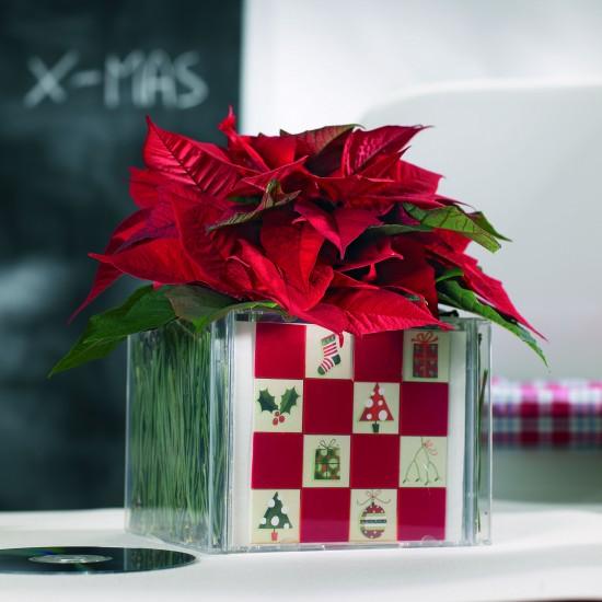 Sag' es durch die Blume - Am 12. Dezember ist Poinsettia Day