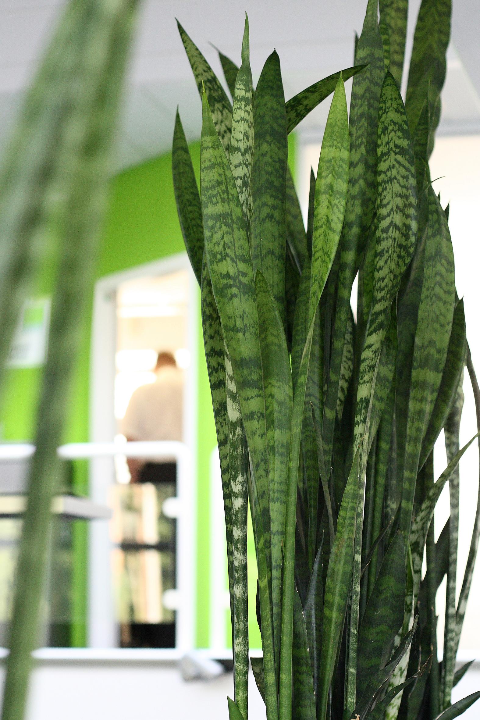 Pflanzen Für Dunkle Räume loft bis jugendstil raumbegrünung für jeden wohnungstyp das