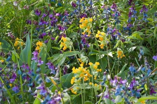 GMH_2012_09-04 Bunt, frech, fröhlich - Primeln für den Garten