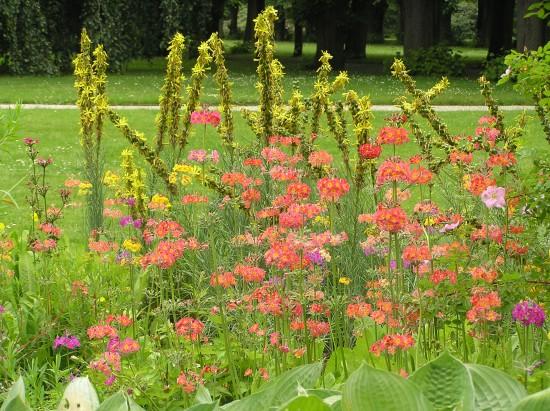 GMH_2012_09-11 Bunt, frech, fröhlich - Primeln für den Garten