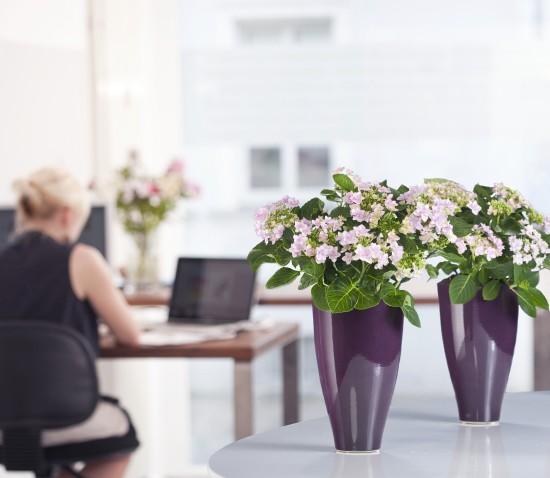 Ob minimalistisch oder romantisch - Hortensien passen in jedes Wohn- und Arbeitszimmer