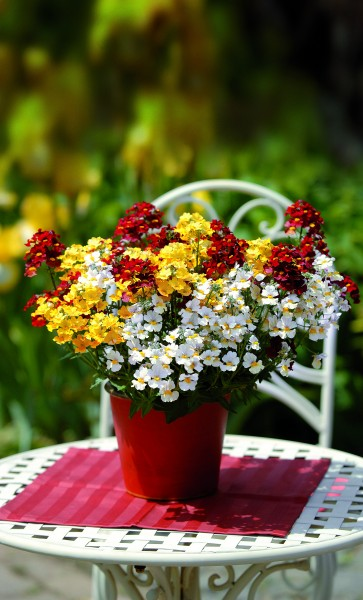 Frech-fröhlicher Mix: Elfenspiegel-Trio wird 2012 Pflanze des Jahres im Norden
