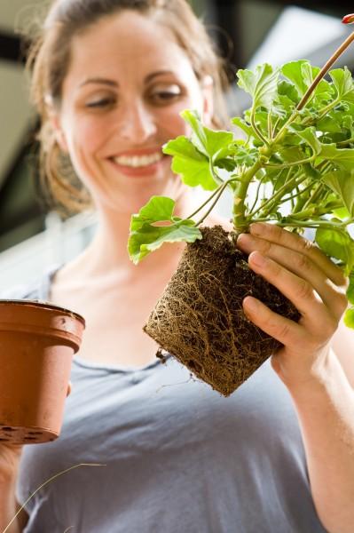 Liebe auf den ersten Blick: Qualität bei Beet- und Balkonpflanzen erkennen