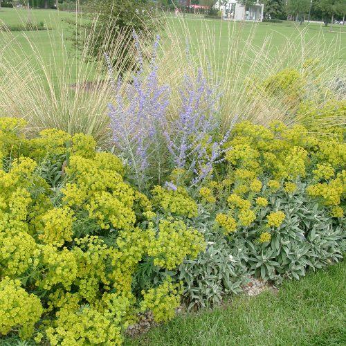 Hängepartie im Garten - Naturnahe Pflanzenbilder schaffen und dennoch Stauden stützenNaturnahe Pflanzenbilder schaffen und dennoch Stauden stützen