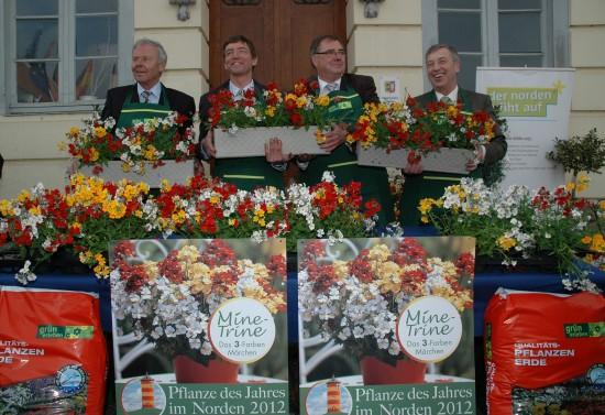 """GMH_2012_17_03_Frech-fröhlicher Mix: Elfenspiegel-Trio """"Mine Trine"""" wird 2012 """"Pflanze des Jahres im Norden"""""""