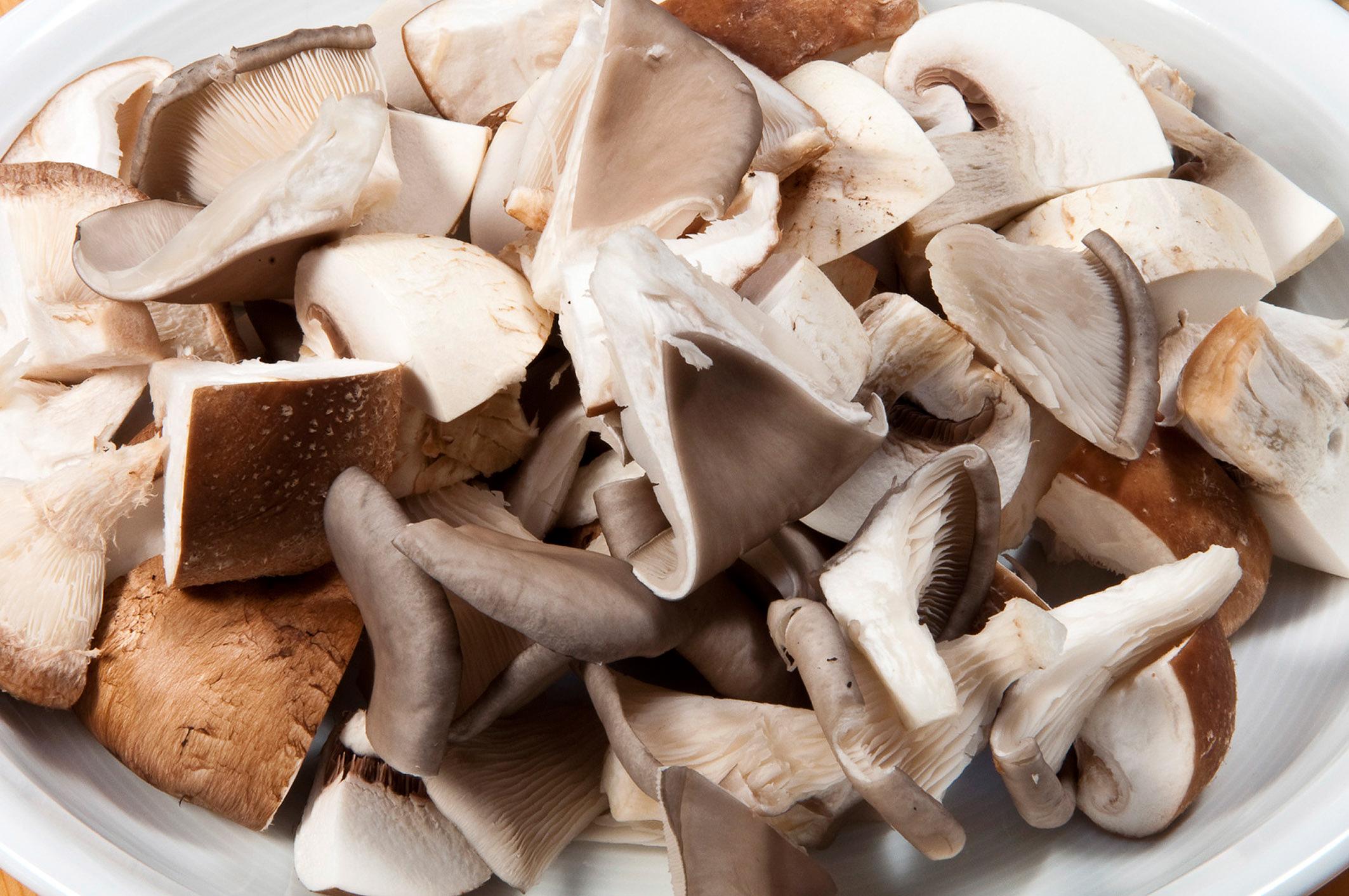 Pilze fördern die Wundheilung