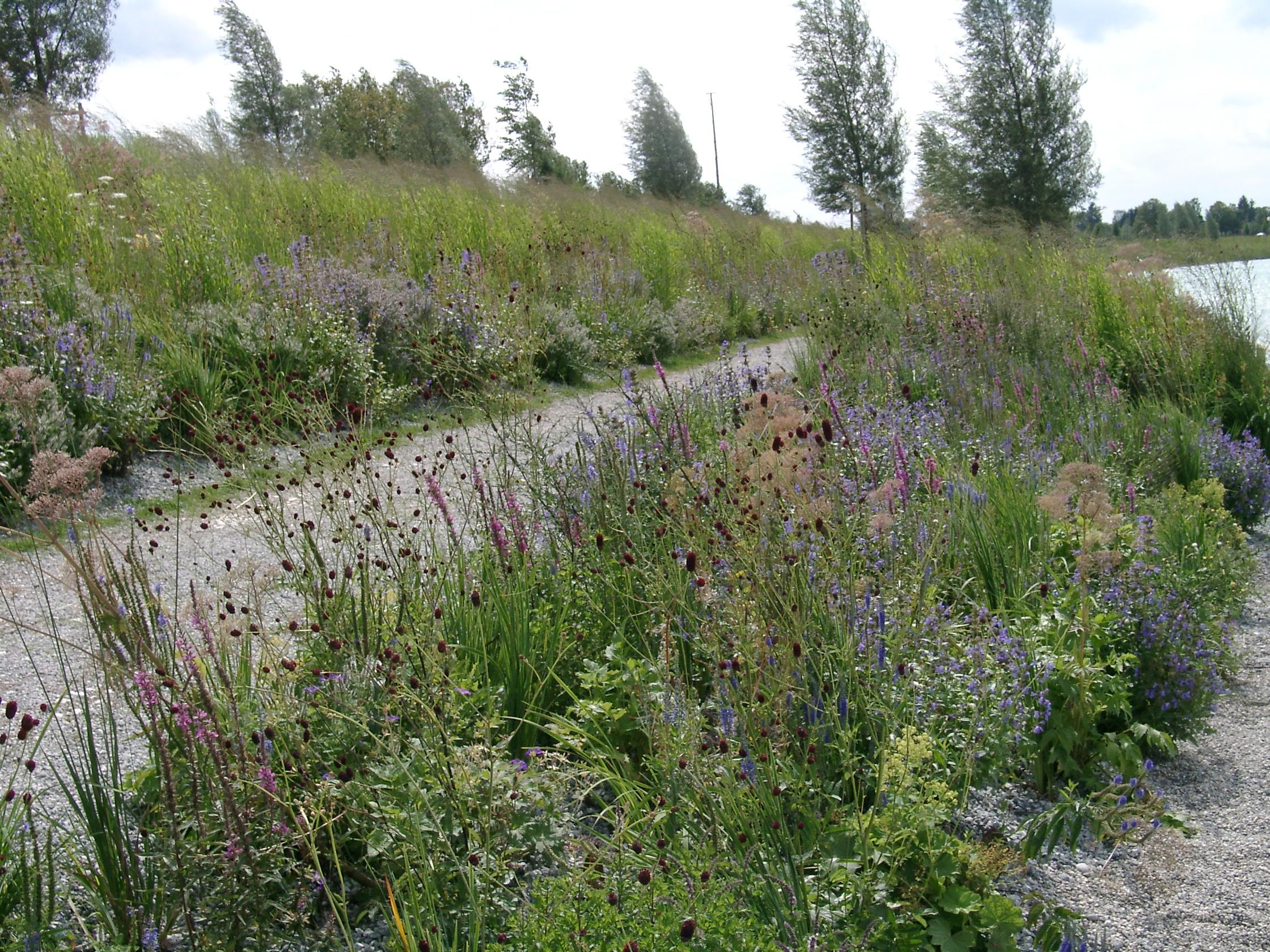 Lebendige Gärten mit heimischen Stauden