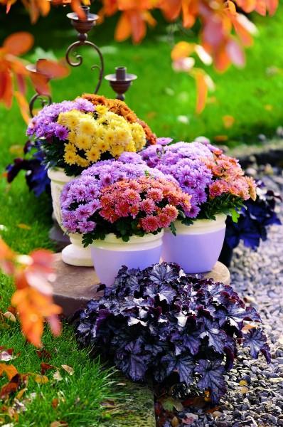 GMH_2012_34_04 Farbharmonie sorgt für ein stimmiges Bild bei der Herbstbepflanzung