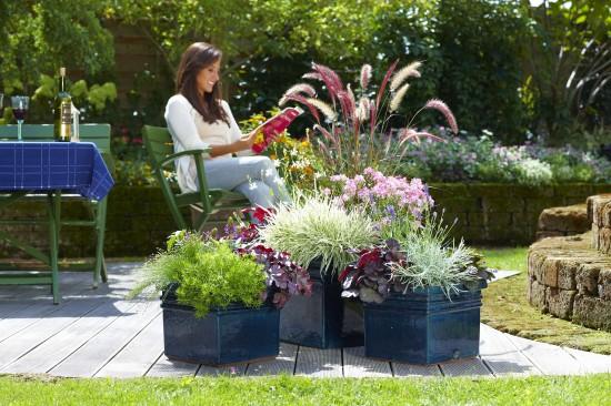 GMH_2012_34_05 Blüten, Blätter und Gräsern bieten reizvolles Herbstambiente in Kübeln und Trögen