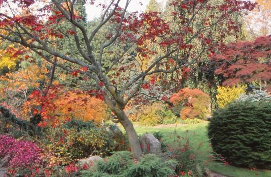 GMH_2012_36_01 Feuriges Finale - Bäume und Sträucher mit prachtvoller Herbstfärbung begeistern zum Saisonende