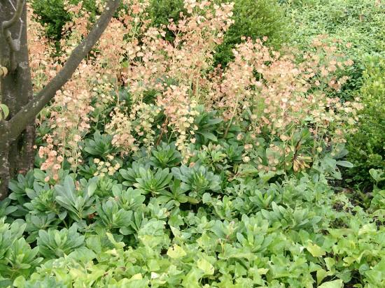 GMH_2012_37_07 Staude des Jahres 2013 - Die Wolfsmilch (Euphorbia) - Vielfalt für den Garten