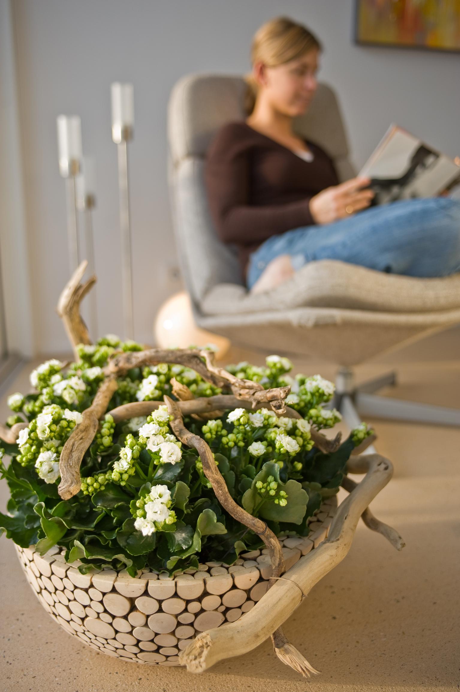 Zimmerpflanzen werden mit etwas Dekoration zum persönlichen Statement