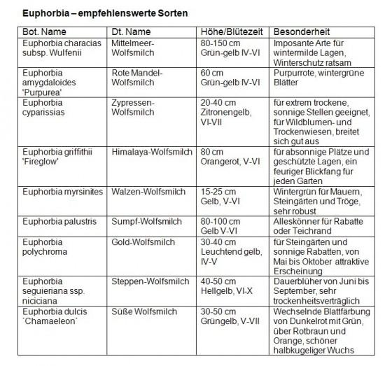 Mediendienst_Stauden_08_2012_Tabelle_Euphorbia_empfehlenswerte Sorten