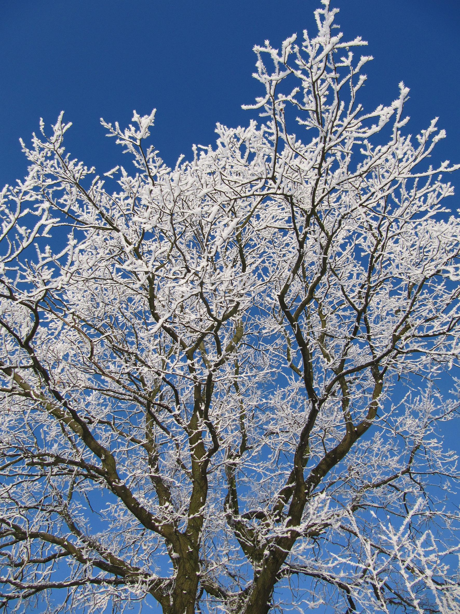 Tricks der Natur: Gehölze im Winter