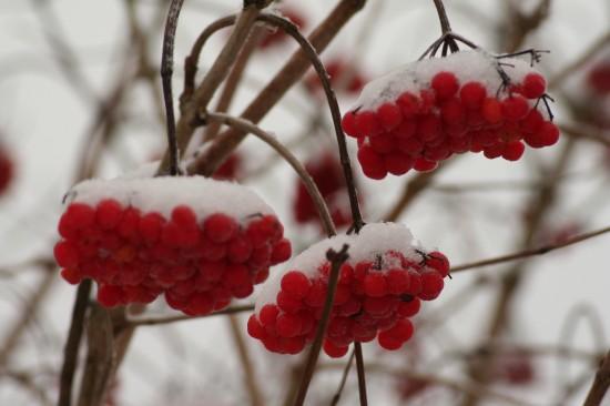 GMH_2012_41_04 Tricks der Natur: Gehölze im Winter
