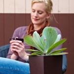 Zimmerpflanzen im Winter: Mit Hydrokultur gut durch die Heizsaison