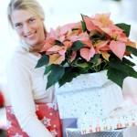 Blumige Grüße im Advent – Am 12. Dezember ist Poinsettia Day