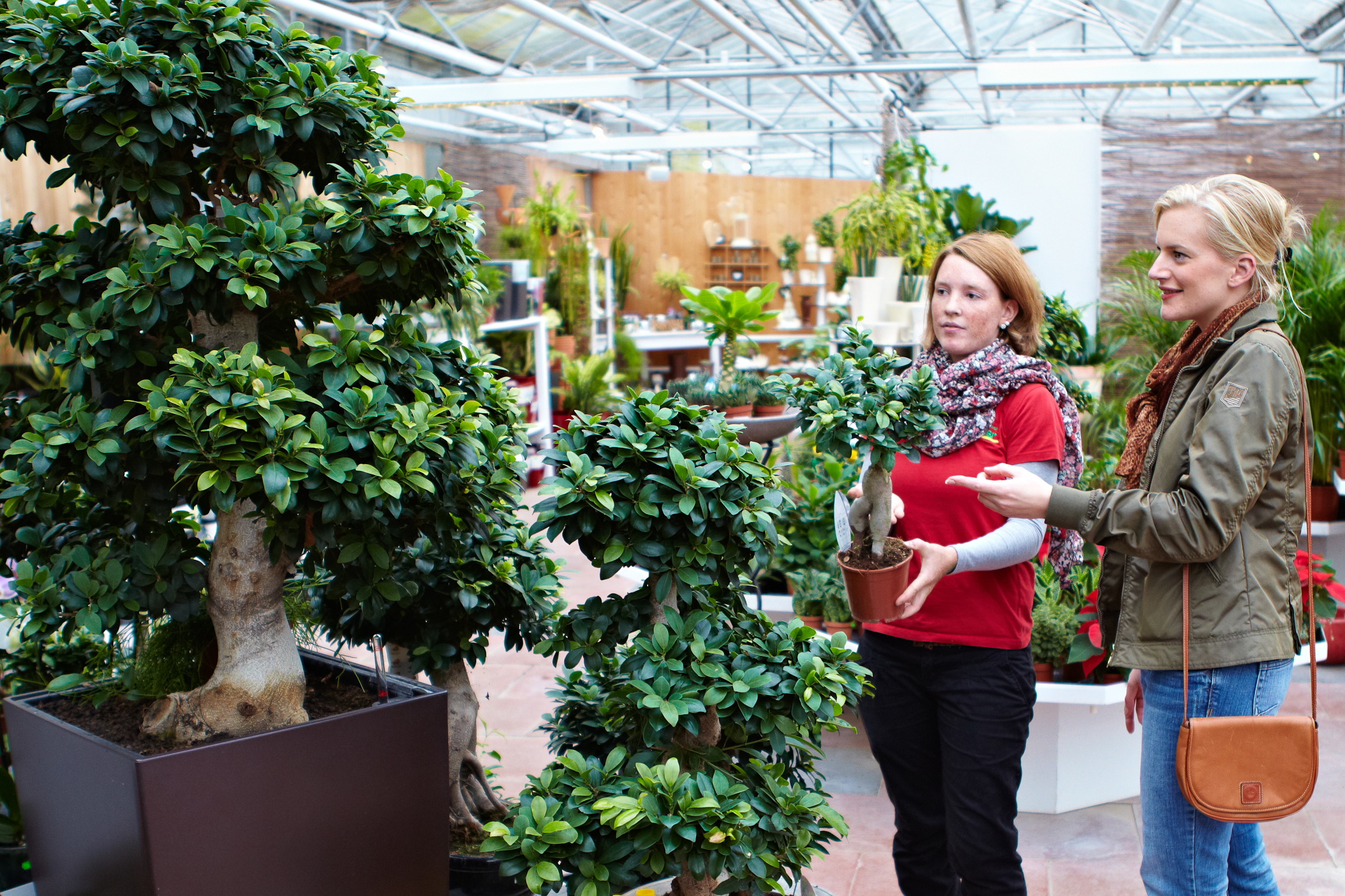 diese zimmerpflanzen gedeihen auch ohne gr ne daumen das gr ne medienhaus. Black Bedroom Furniture Sets. Home Design Ideas