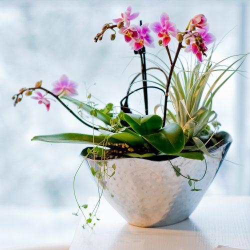 Orchideen – Vielfalt tropischer Schönheiten