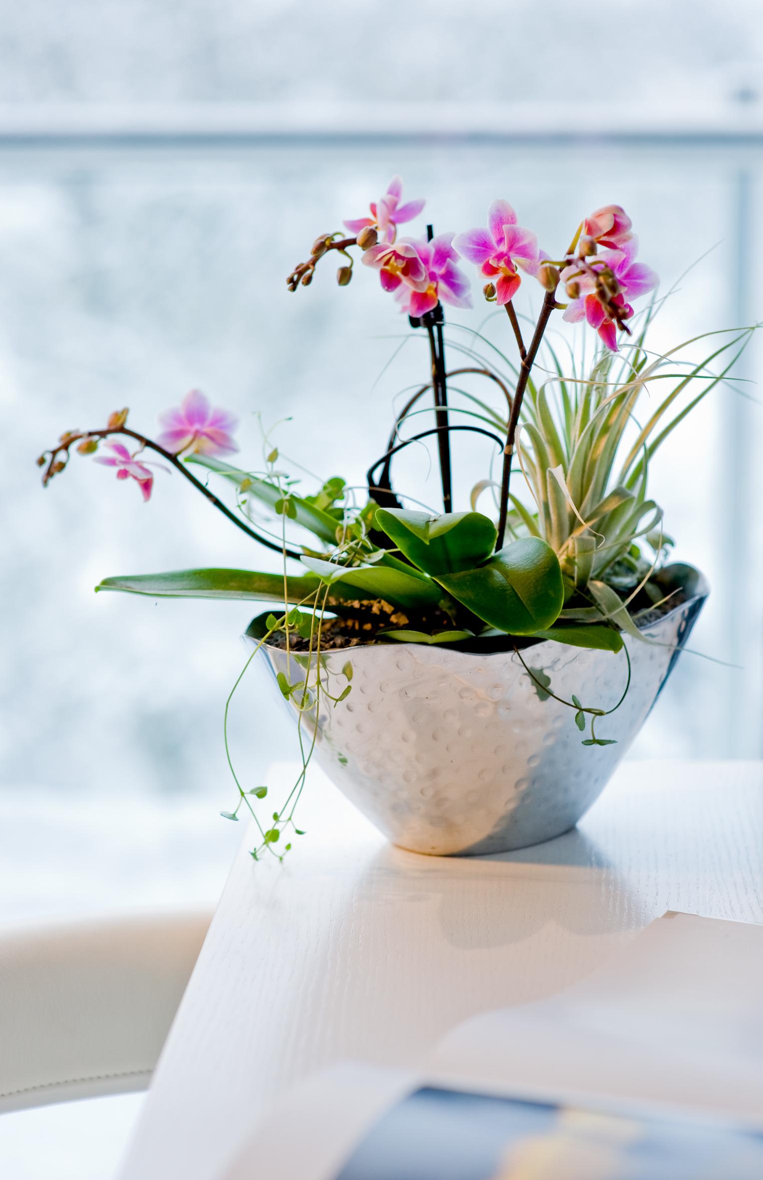Orchideen vielfalt tropischer sch nheiten das gr ne for Ausgefallene zimmerpflanzen