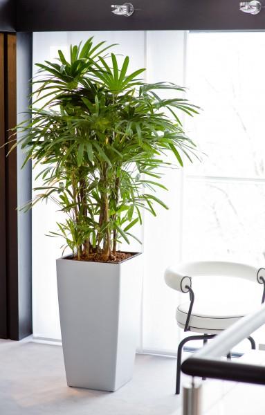 Green Home reloaded - Hydrokultur sorgt für ein grünes Zuhause mit Wohlfühlatmosphäre