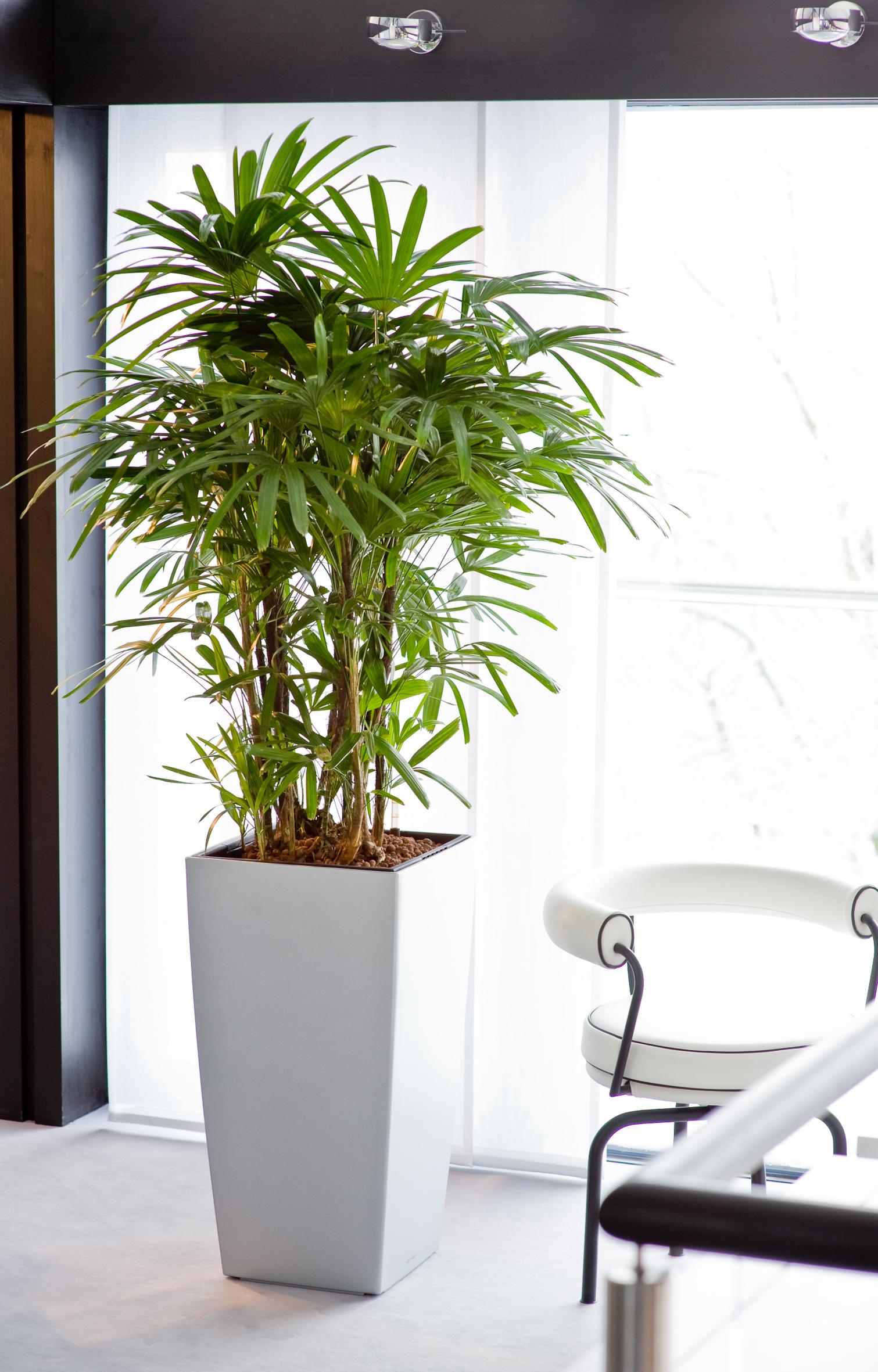 Green Home reloaded – Hydrokultur sorgt für ein grünes Zuhause mit Wohlfühlatmosphäre