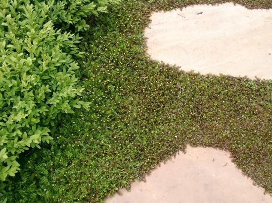 GMH_2013_09_02 Der Weg ist ein Ziel - Mit Stauden umrahmt gestalten auch Wege den Garten