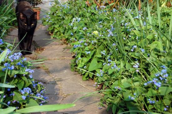 GMH_2013_09_06 Der Weg ist ein Ziel - Mit Stauden umrahmt gestalten auch Wege den Garten