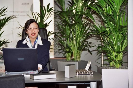 Grüne Stresskiller- Pflanzen am Arbeitsplatz steigern das Wohlbefinden