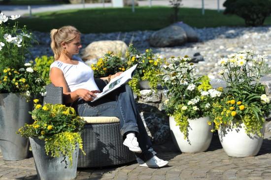 Gelbe Blüten sind Trend für Kübel, Töpfe und Kästen
