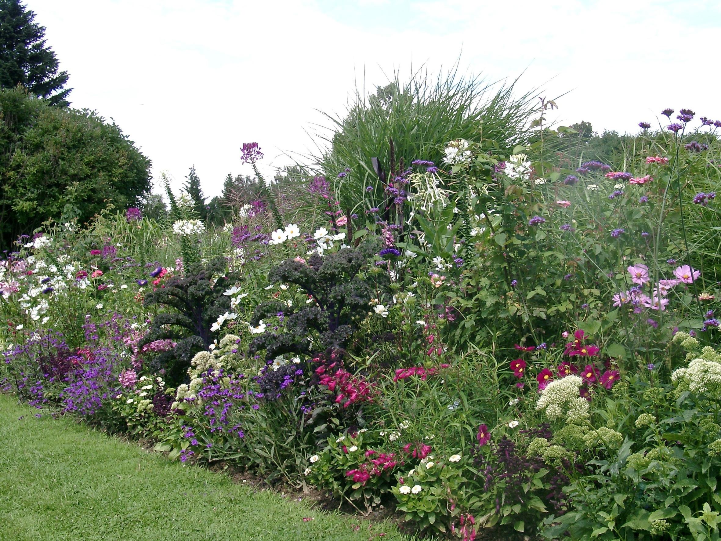 Weitere Bilder zu: Jeden Sommer einen neuen Garten – Einjährige geben in Staudenpflanzungen immer wieder ein anderes Blumenbild