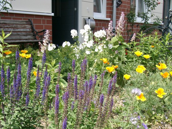 13_03 Jeden Sommer einen neuen Garten