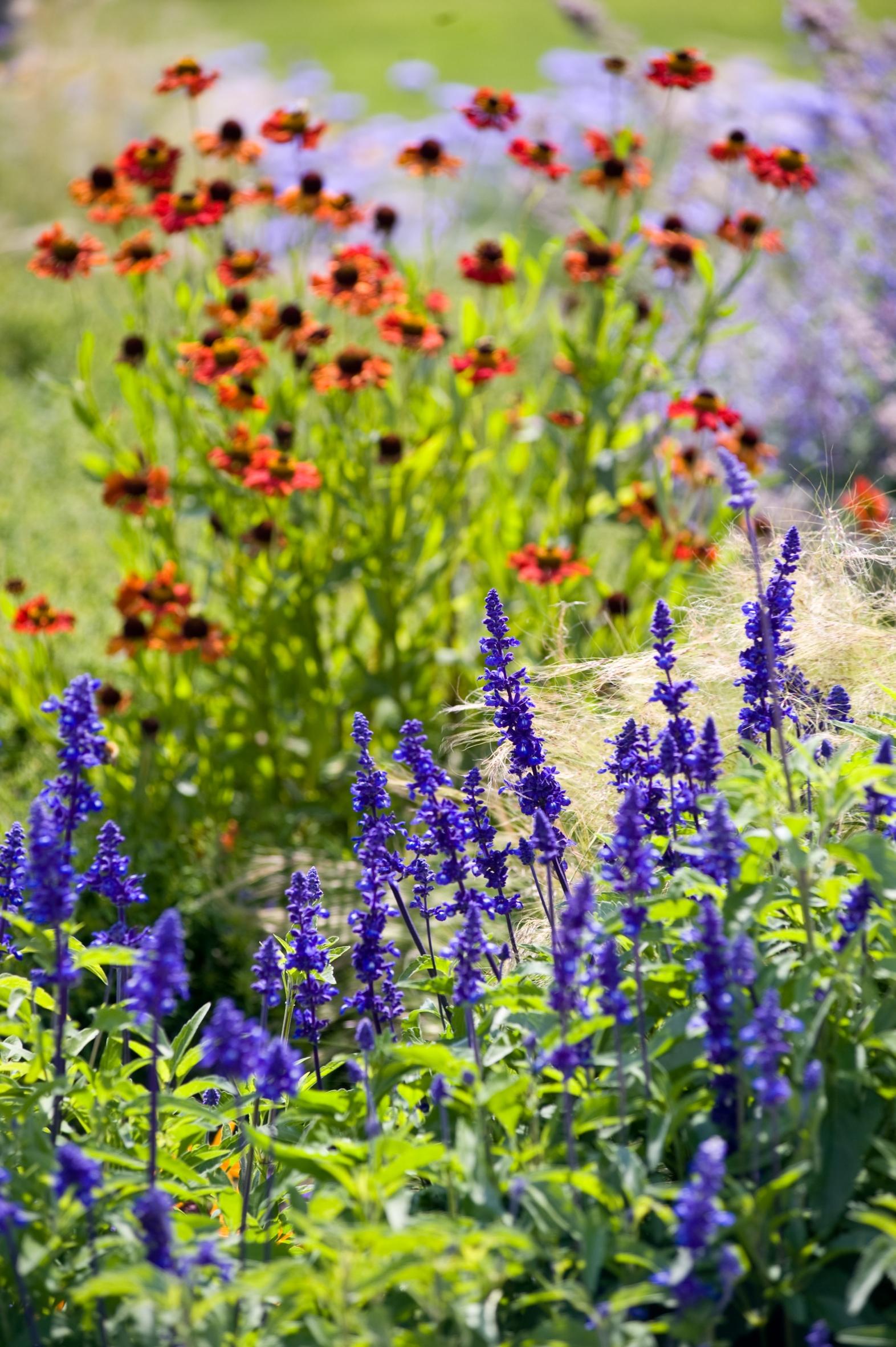 Jeden Sommer einen neuen Garten – Einjährige geben in Staudenpflanzungen immer wieder ein anderes Blumenbild