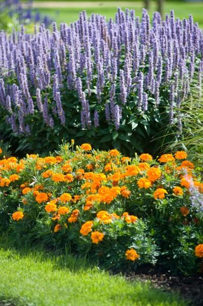 13_05 Jeden Sommer einen neuen Garten