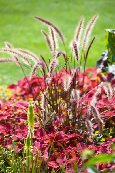 13_07 Jeden Sommer einen neuen Garten