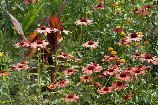 13_10 Jeden Sommer einen neuen Garten