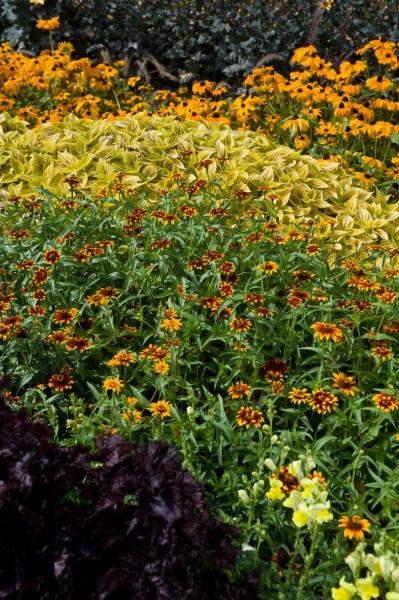 13_13 Jeden Sommer einen neuen Garten
